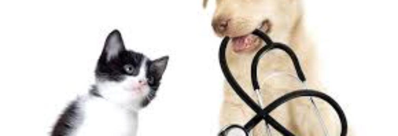 Union Square Veterinary Clinic