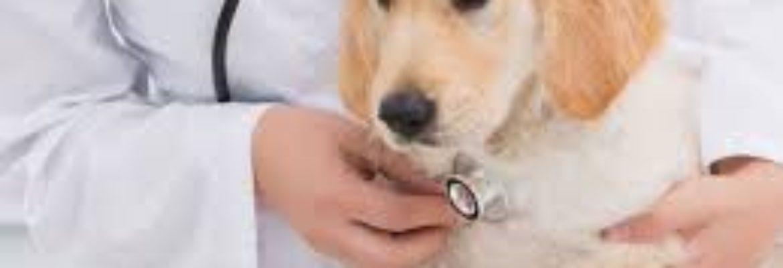 Huron Veterinary Hospital Inc
